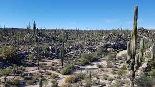 #2-2 Ура, лето! Мексиканская пустыня и долгожданные кактусы!!!