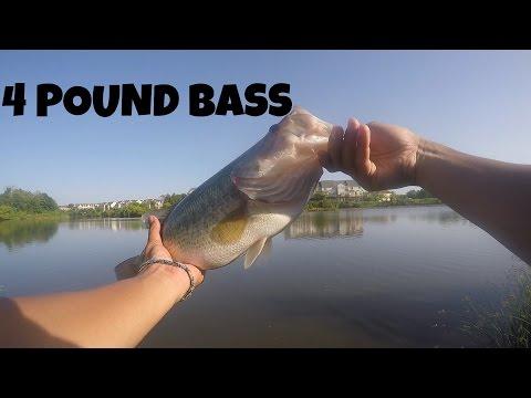 Northern Virginia Pond Fishing: Four Pound Bass
