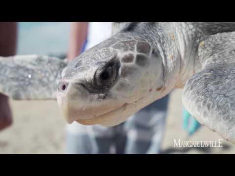 """""""Stranding On A Sandbar"""" and saving Sea Turtles"""