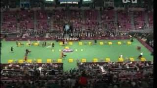 134th Westminster Kennel Club Dog Show 2010 Part 1