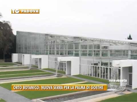 PADOVA TG - 18/09/2015 - ORTO BOTANICO: NUOVA SERRA PER LA PALMA DI GOETHE