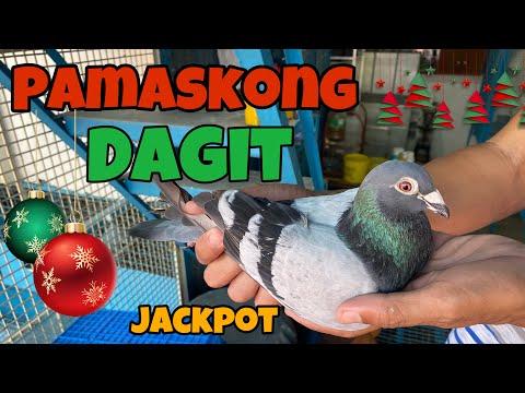 pamaskong-dagit-|reggie-cruz-loft-&-aviary-#racingpigeon-#reggiecruzloftandaviary