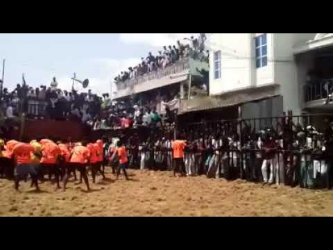 Thirumanur jallikattu 2018 (sample)