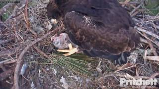 swfl-eagles-how-to-unzip-it-tug-o-fish-with-mom-2-19-17
