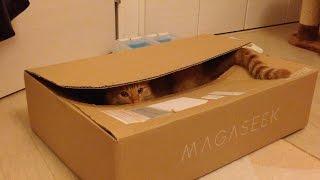 最近箱が好きなひろし君。 尻尾の先まで見事に収まりました。 その箱に...