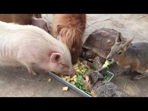 Animals eating