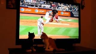 Kittens Love Baseball