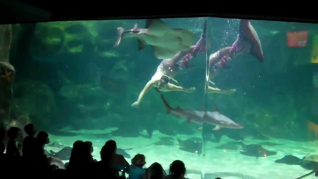 Видео русалки секыс фото 234-891