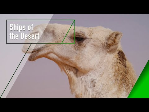 Ships of the Desert  The Secrets of Nature