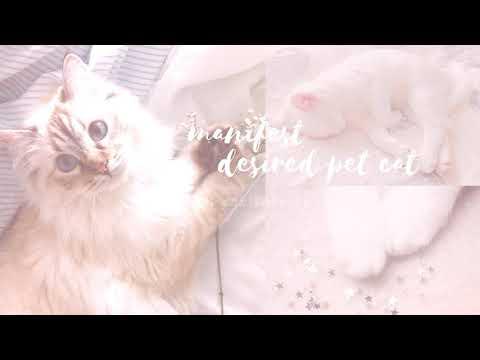 —❝manifest desired pet cat❞ ♡ subliminal - candii ♡