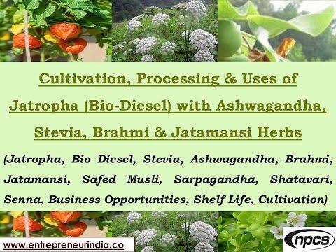 Cultivation, Processing & Uses of Jatropha (Bio-Diesel) With Ashwagandha & Jatamansi Herbs