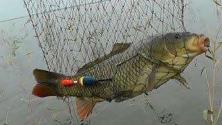 Рыбалка на карпа и нашествие варваров