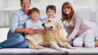 Veterinary Hospital | Richmond, TX - Greatwood Veterinary Hospital