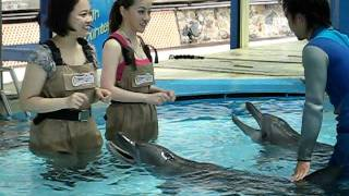 Dolphin Encounter - Ocean Park