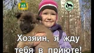 Возьми животное животное из приюта