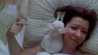 Ready to 'sleep' with a Devon Rex kitten?!?