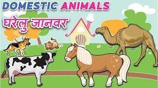 Animals name in hindi | Domestic animals | घरेलु जानवर | Domestic animals name in English