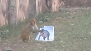 LOL Monkey Terrified From Langur Photo