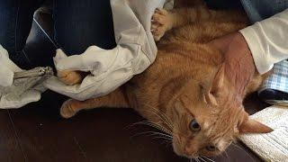 弟妹子猫「けん玉」と強めのスキンシップをとるので、 怪我しないように...