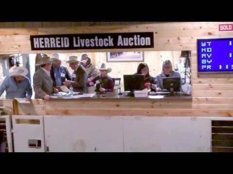 Cash Owens  Auctioneer