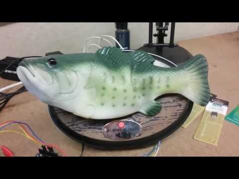 Chuck and Kelly - Big Mouth Billy Bass Is Now Works With Alexa