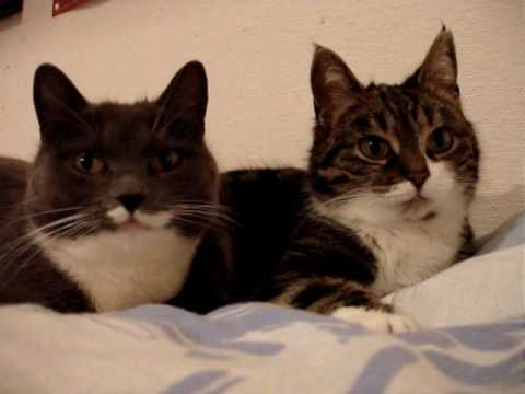 Happy Cats Talking Youtube