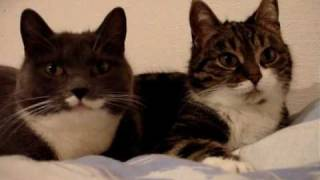 The two talking cats thumbnail