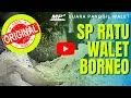 Suara Panggil Walet Ratu Walet Borneo Silahkan Didownload  Mp3 - Mp4 Download