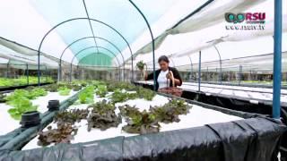 การปลูกผักไฮโดรโปนิกส์ ตอนที่ 4 โดย ฟาร์มเกษตรอัจฉริยะ Fresh Ville Farm