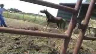 what not to do to a horse