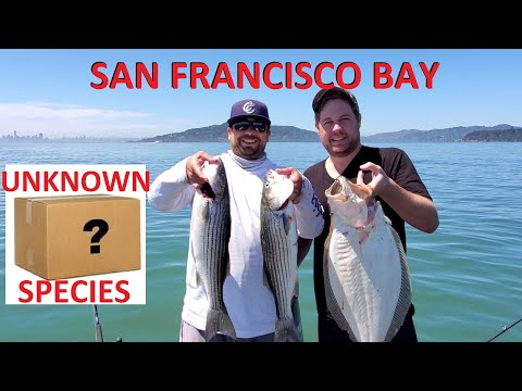 Fishing Alcatraz & Angel Island For Halibut & Stripers W/ Mystery Catch
