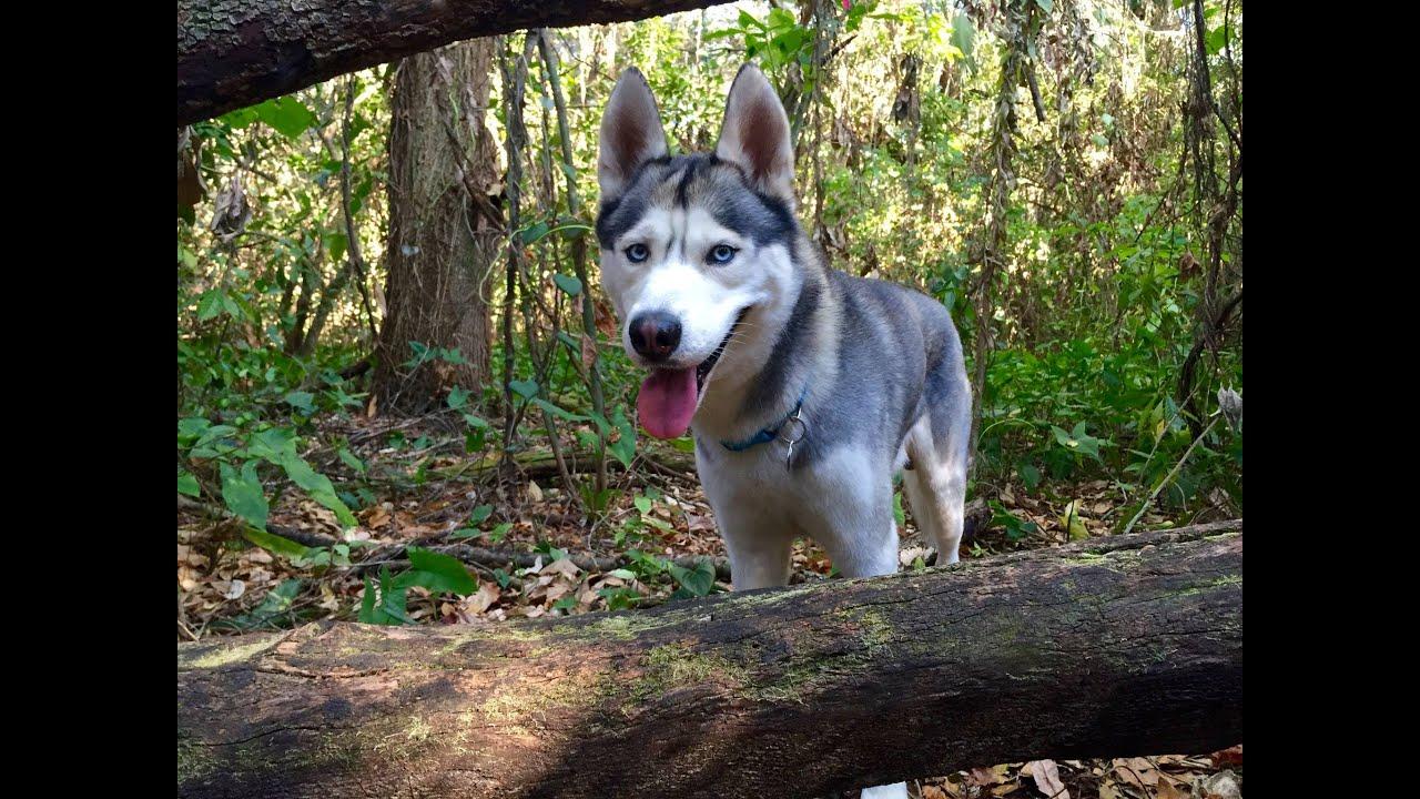 Gohan Explores a Forest Trail!