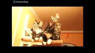 Котята с большими ушами №4