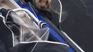 ДРУЗЬЯ СПАСЛИ ТИГРА! FRIENDS RESQUED A BEAR!