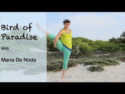 bird of paradise  yoga basics  youtube
