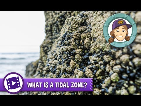 Ask Tierney - What is a tidal zone?