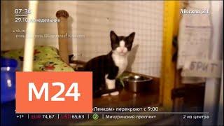 В Королеве закрывается приют для животных - Москва 24