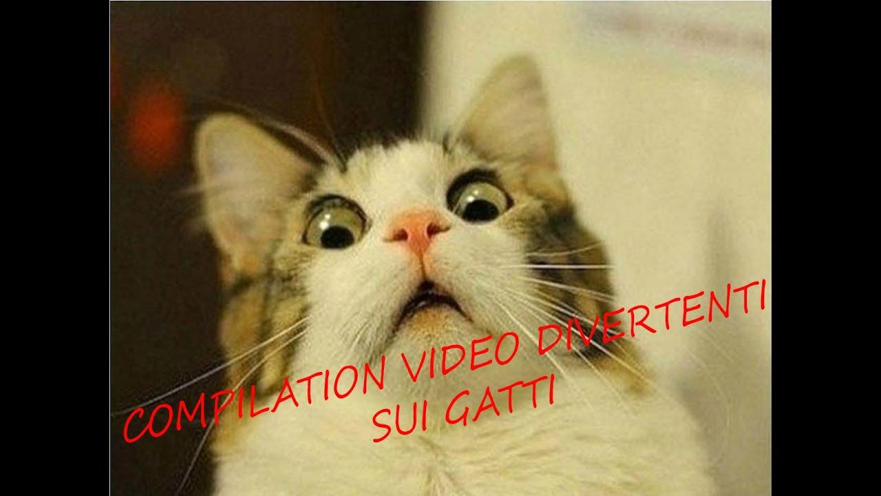 compilation gatti divertenti 2016 youtube