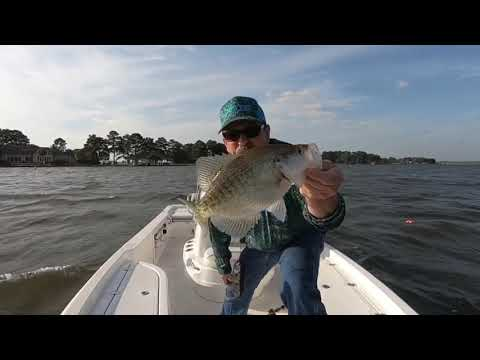 Crappie Fishing Lake Conroe