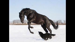 Dogs and Horses Best Friendship  Собаки и лошади,трогательная дружба