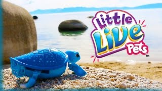 new little live pets lil turtle starry at the beach cutest pet