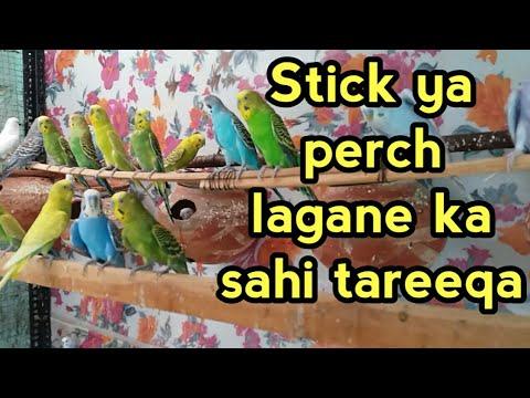 Australian parrots ki perch, stick lagane ka sahi tareeqa