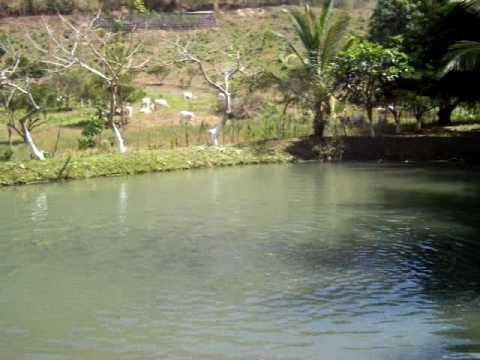 Tanque para cria de cachama doovi for Como hacer un criadero de peces