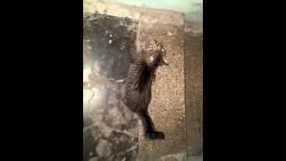 Незнакомая кошка пришла в квартиру 05.11.2015
