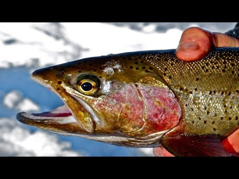 ICE FISHING At St Vrain State Park, Longmont, Colorado