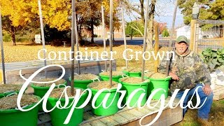 HD How to Grow Asparagus in Containers (Part 2 of 2)