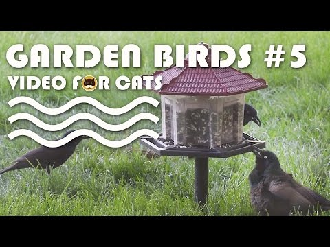 BIRDS VIDEO FOR CATS TO WATCH - Garden Birds #5. Winged Blackbird, Sparrows, Common Grackle...