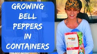 Growing Bell Peppers in Containers Outdoors - Arizona Organic Vegetable Garden