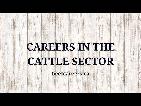 Careers Opportunities in Livestock Marketing & Operations