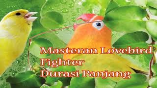 Gambar cover Masteran Lovebird Fighter Ngekek Panjang